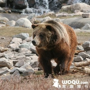 Up to 30% OffYellowstone Sale Travel Package @ woqu.com