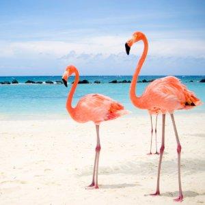 Up to 75% OffAruba Upscale All-Inclusive Beach Resort