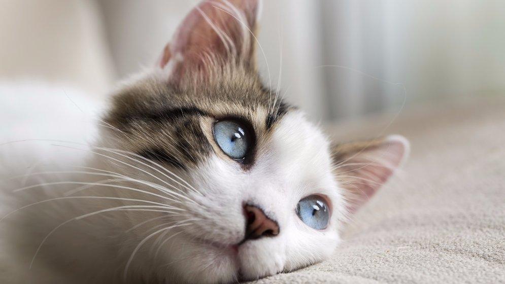 嗨,你的衣服里也住着小猫咪吗?