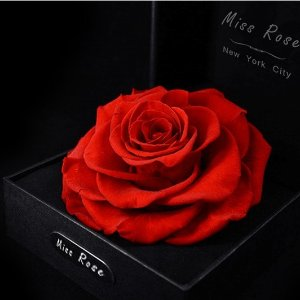 25% OffMiss Rose Special Sale