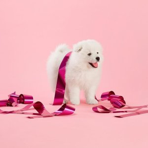 30% OffYear of the Dog Collections @ kate spade